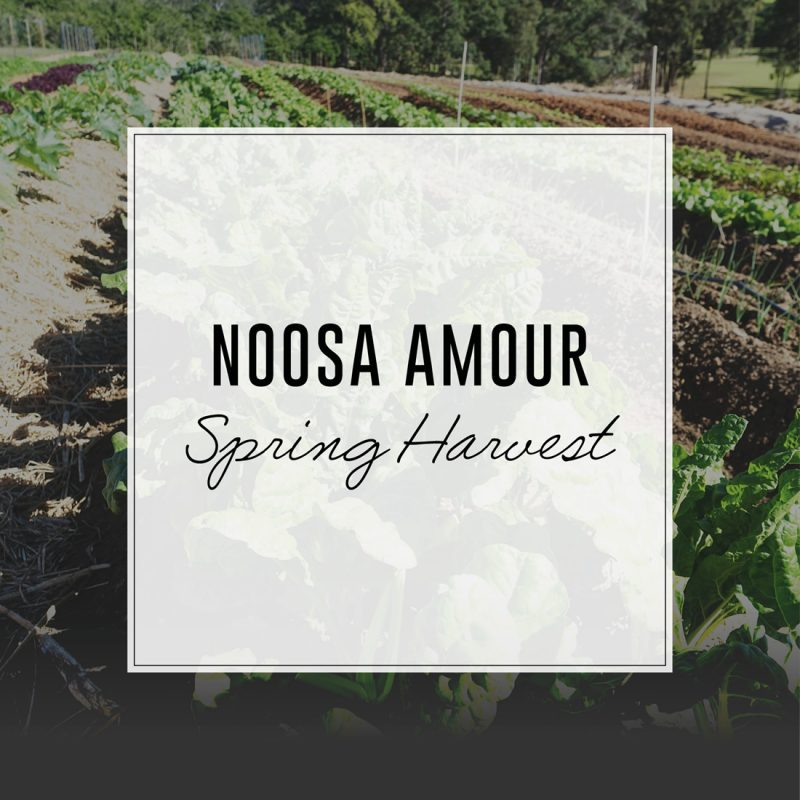 noosa-amour-spring-harvest-2017-08-04-whats-on